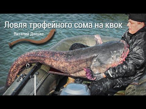 ловля сома на квок с эхолотом видео