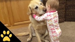 Cute Dogs And Adorable Babies: Compilation