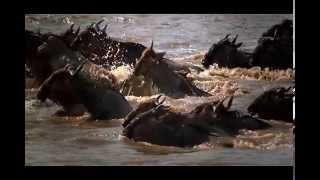 (6) Les Grandes Migrations - Derrière le Rideau