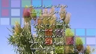 من اجمل  الاناشيد  - عبد الله المهداوي