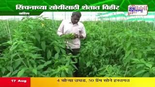Peek perni - Green Chilli farming in Washim