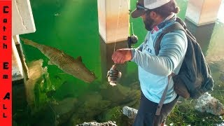 GIANT STRIPED FISH Takes FISH on the FISHING LINE in CRYSTAL CLEAR WATER!