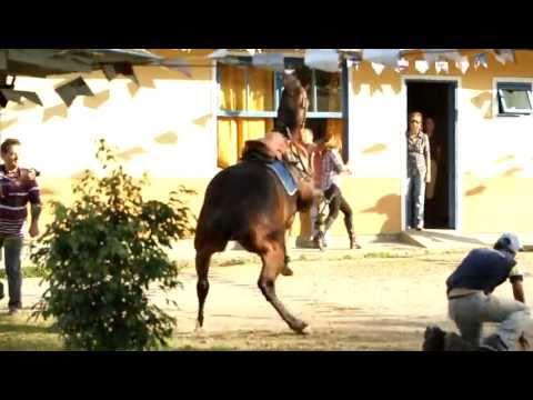 Cavalo assustado
