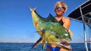 Florida Offshore Fishing: Big Mahi!