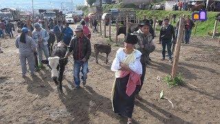 Ecuador - Otavalo Cattle Market