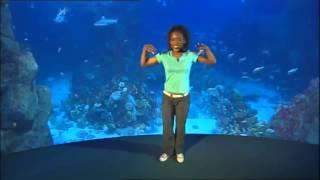 Boogie Beebies - Ocean Motion