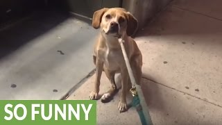 Dog upset pet store is closed, refuses to leave