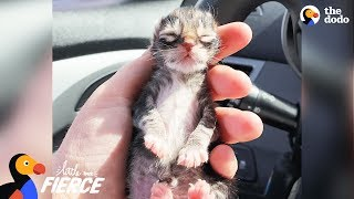 Newborn Kitten Who Was Frozen Solid Grows Up To Be Strong And Feisty | The Dodo Little But Fierce