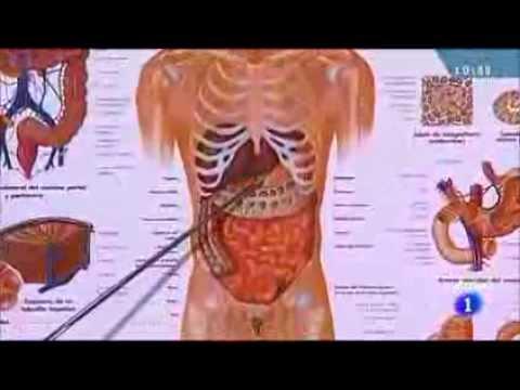 ¿Cómo se producen los gases intestinales