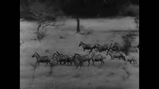El tesoro de Tarzan 1941 castellano chus descargacineclasuico om