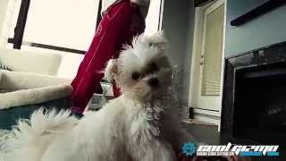 Introducing Ollie ! A 3 month old Maltese puppy filmed with the CGICAM