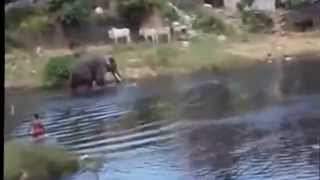 Violent Elephant Attack in kerala India..