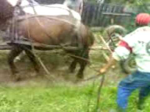 lópróba tekerőpatakon