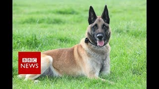 Highest honour for military dog - BBC News