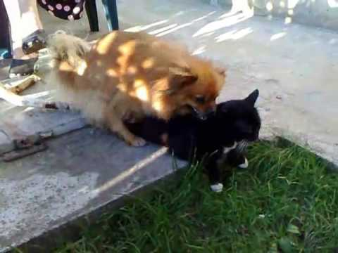 Xxx Mp4 Dog Tries To Have Sex With A Cat 3gp Sex