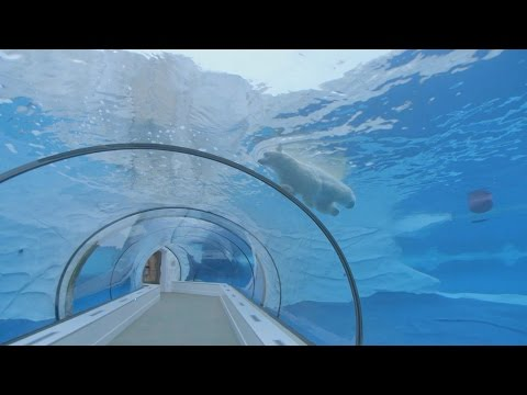 Horizon explores the existence of Zoos - Horizon: Should We Close Our Zoos? - BBC Two