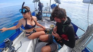 Coral Reef Rendezvous - Free Range Sailing Ep 63