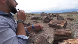 Pietrified Forest National Park - Foresta pietrificata in Arizona