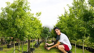 PLANTING 20,000,000 TREES IN 24 HOURS! (MrBeast Challenge)