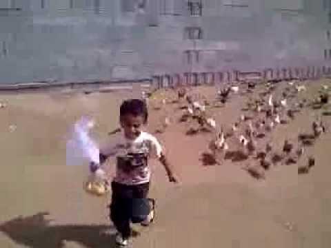 Gallinas Locas persiguen a niño llorando Papas Trolls solo lo ven corriendo