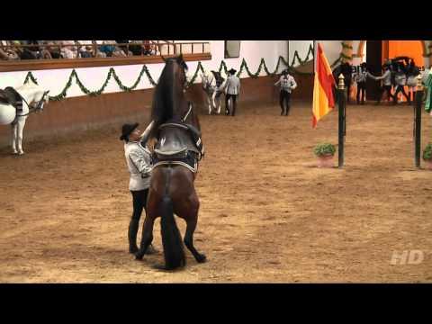 Saltos de caballos Doma Clásica Fundación Real Escuela Andaluza de Arte Ecuestre