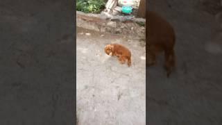 Sunny leone with dog quick
