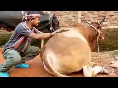Xxx Mp4 Dhakar Goru ঢাকার গরু 3gp Sex