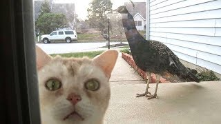LAUGH OUT LOUD with the FUNNIEST CATS - Funny CAT compilation