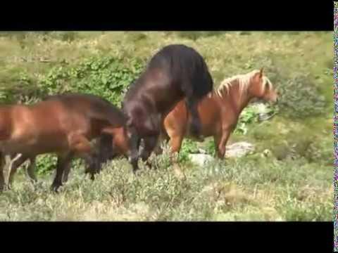 Hesteslepp ved Bekkelegeret i Folldal