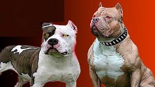 10 أشكال من الكلاب ان وجدتها عليك الهرب فورا ..!