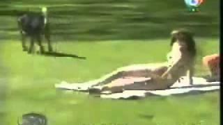 Anjing jilat memek