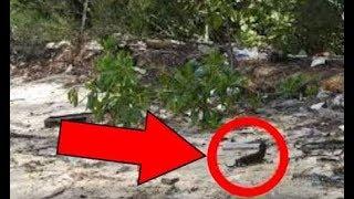وجد رجل هذا الحيوان صغير عند الشاطئ، لكن أنظروا من أتى لأخذه سبحان الله