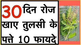 Tulsi ke fayde | Tulsi health benefits  | Health benefits of basil leaves