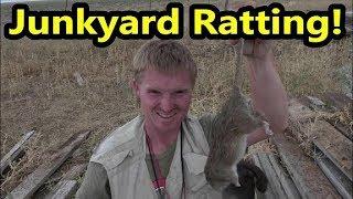 Junkyard Ratting!