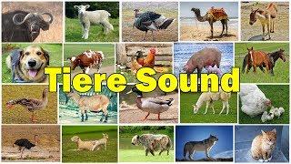 Tiere auf dem Bauernhof Name und Ton | Kinder Spaß Lernen Video | Old MacDonald Farm