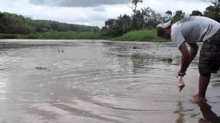 Man Almost Gets Attacked By Crocodile (As seen on Tosh.O, Yahoo News, CBS News) *This is my video.