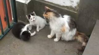 Two kittens and their mother