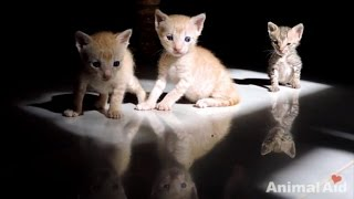 Watch Five Orphaned Kittens Get Rescued from a Restaurant Exhaust Vent