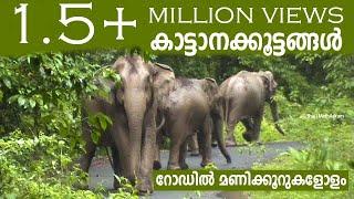 Athirappilly to Malakkapparai (via) Sholayar Rain Forest