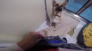 Volunteer Canine Assistant Evesham
