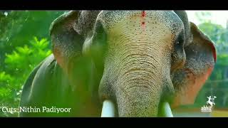Thechikottukavu ramachandran mashup |തെച്ചിക്കോട്ടുകാവ് രാമചന്ദ്രൻ