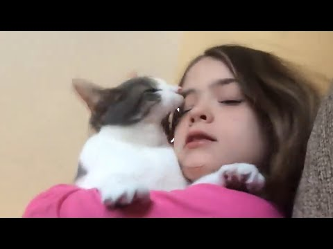 Cats Don t Like Things Funny Cat Video Compilation 2017