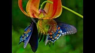 Marillion & Beautiful & lyrics