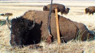 2012 Montana Buffalo Hunt