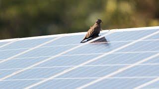 Video: FPL & Audubon Florida Join Efforts at Solar Power Plant Sites
