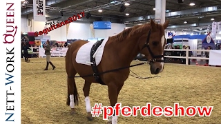 Equitana Essen 2017 Pferdeshow Pferdesport Equestrian Sports Dressur Springen Kaltblüter