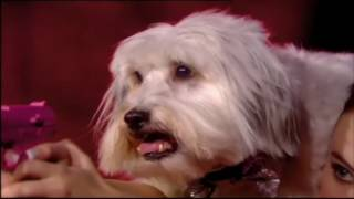 Ashleigh and Pudsey - RIP Pudsey