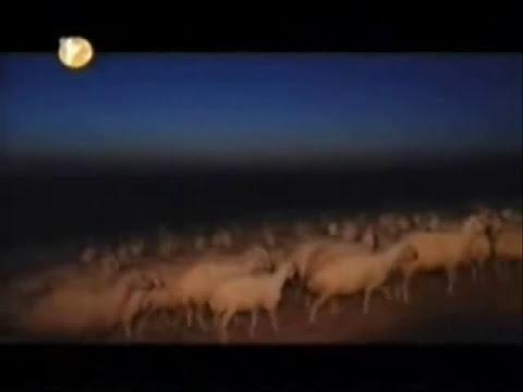 Bozkırın Gücü 2. kısım Sivas Kangal Köpeği Belgesel
