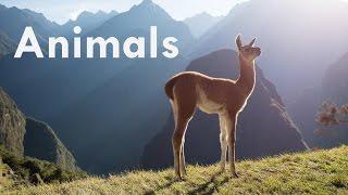 Animals & Wildlife Photography (Instant Photo Reviews)!