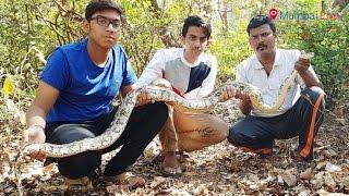 7-foot long snake caught meandering in Tilak Nagar | Mumbai Live
